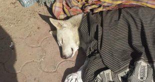 شاهد .. ماذا فعل هذا المتشرد في أحد أزقة صنعاء (صور بدون عنوان !)