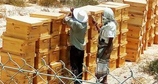 شبوة:مؤسسة ميار للتنمية توزع معدات الدواجن وخلايا نحل