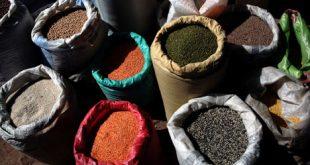 بدعم من منظمة الفاو للتغذية والأمن الغذائي تنفذ مؤسسة ميار توزيع ما تبقى من البذور الزراعية
