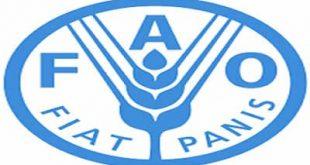 الحديدة:الفاو تدشن توزيع مساعدات طارئة لمربيي الأبقار المتضررين بالحديدة