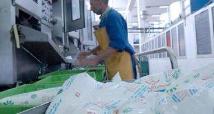 الحديده:الهيئة الوطنية تشتري حليب تهامة دعما للأسر المنتجة