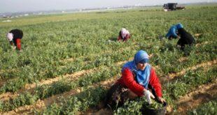 الحديدة: النساء شركاء الرجال في التغلب على الفقر