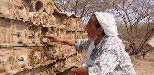 الحرب تعصف بتجارة العسل في الحديدة.
