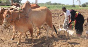 اليوم العالمي للفتاة الريفية